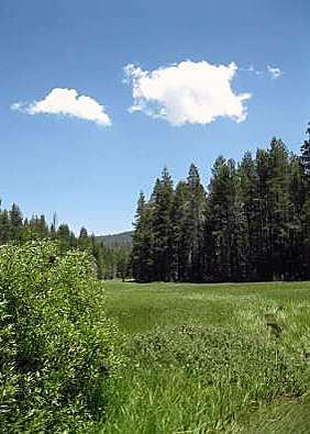 What is the subject of this photo other than to show the beautiful landscape of McGurk Meadow, YNP.  July 2011.